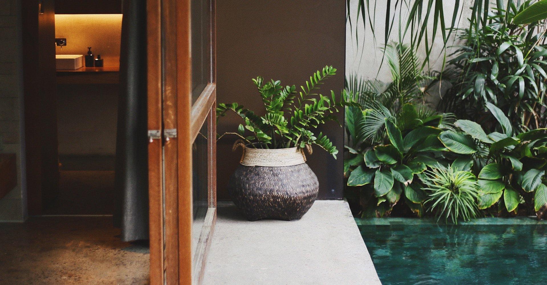 Plante verte dans une pièce